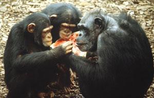 Understanding Social Darwinism